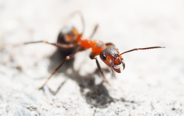 Pest Control Services Fot Worth Texas